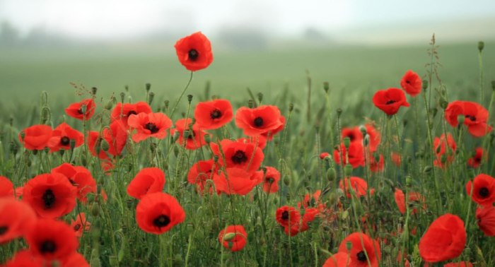 Problems with the 'The PoppyWar'
