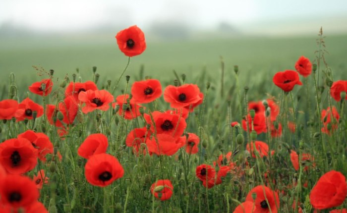 Problems with the 'The Poppy War'